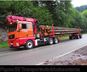 Figura 53: Transporte de árboles enteros